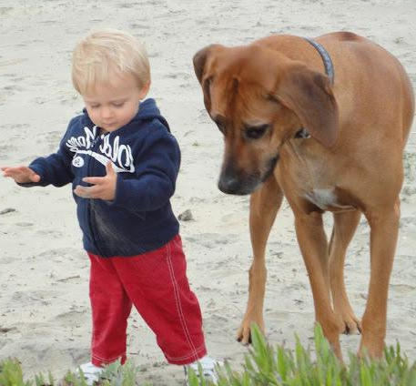 Ridgebacks and Kids